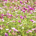 写真: 花の陰影