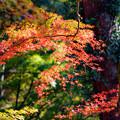 写真: 煌めきの秋