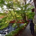 写真: 紅葉狩りの散歩道