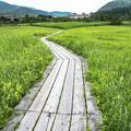 写真: 箱根湿生花園