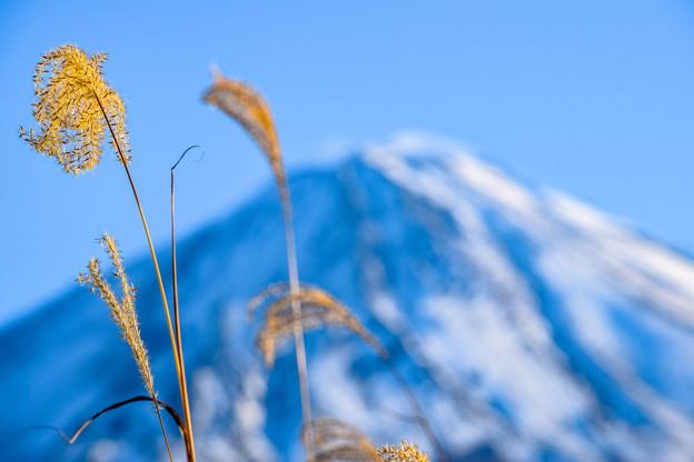 写真: 冬の一コマ