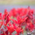 写真: 秋の紅