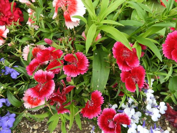 小さな奇跡のような花たち