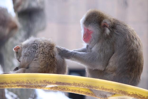 繋がる 旭山動物園