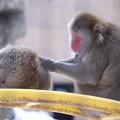 写真: 繋がる 旭山動物園