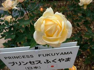 2009_1123岡山にて0001
