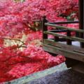 写真: 月華殿と紅葉2014
