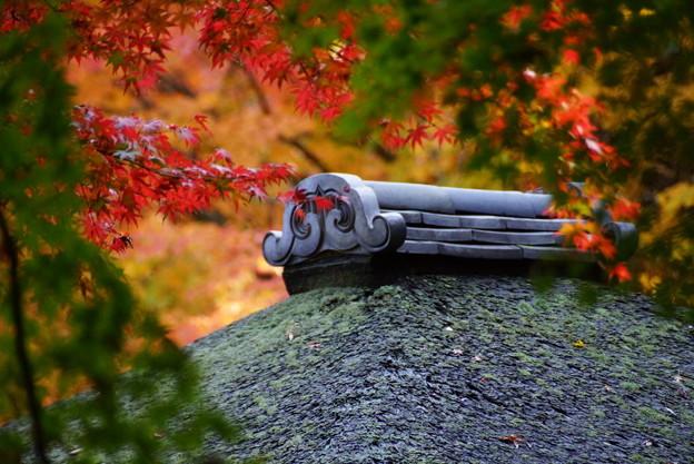 Photos: 聴秋閣の屋根と紅葉2014
