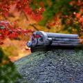 聴秋閣の屋根と紅葉2014