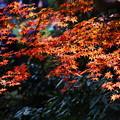 紅葉の三渓園2014b