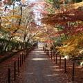 写真: 紅葉の参道、光明寺2014b