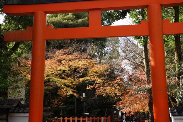 Photos: 晩秋、紅葉が残る八坂神社!2014