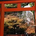写真: 晩秋、紅葉が残る八坂神社!2014