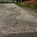 写真: 落葉の白砂檀、法然院!