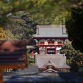 写真: 鎌倉鶴岡八幡宮