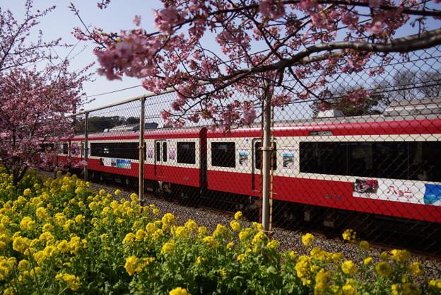 Photos: 菜の花と赤い電車2015d