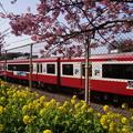 菜の花と赤い電車2015d