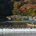 写真: 京都嵐山の晩秋風景!(091130)