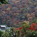 写真: 錦色の嵐山091130-914