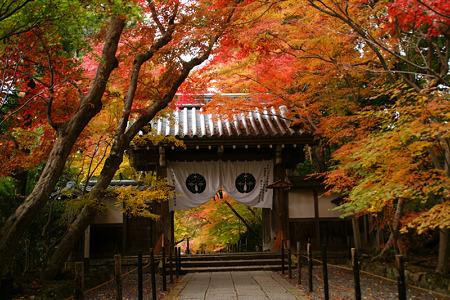 紅葉の山門!(101124)