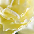 写真: 幸せな黄色い花弁