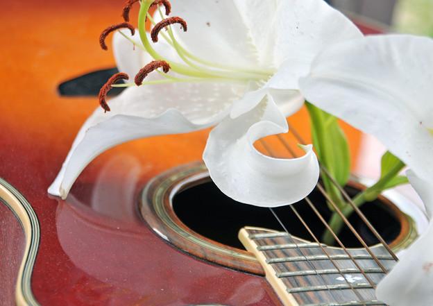 欠けた弦の奏でる百合の花