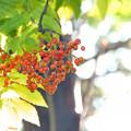 写真: 秋から冬への旅立