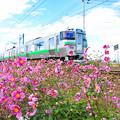 写真: 花と電車