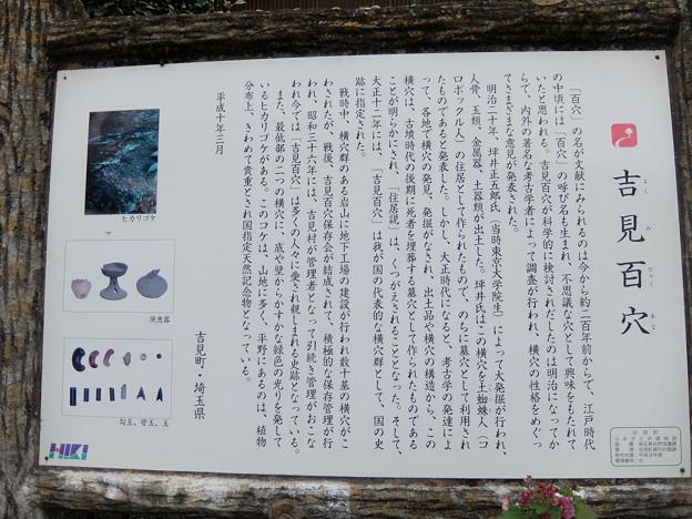 吉見百穴(国指定史跡)