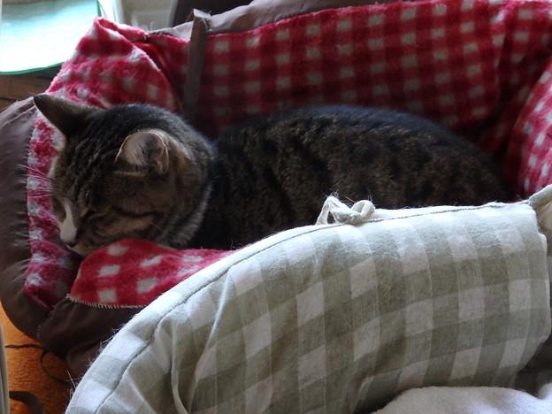 冬用ベッド