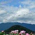 Photos: 蓮花~畝傍山~葛城山~青空へ