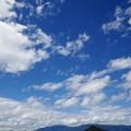 写真: 藤原宮:盛夏の蓮池