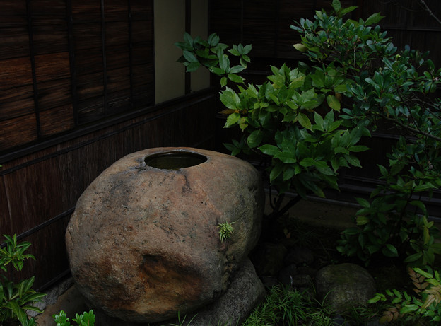 出雲文化伝承館:手水鉢(つくばい)のノキシノブ