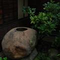 写真: 出雲文化伝承館:手水鉢(つくばい)のノキシノブ