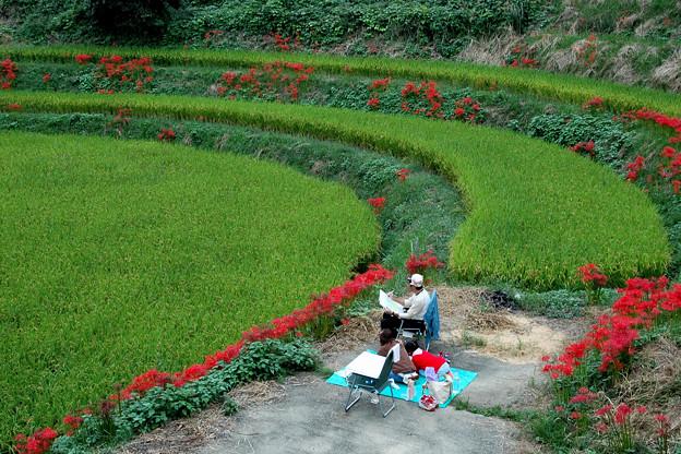 明日香(稲渕):彼岸花に囲まれて・・・