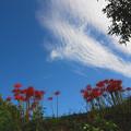 写真: 08.09.27-明日香:稲渕の秋