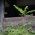 写真: 板取宿:紫式部と古民家