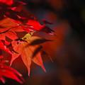 写真: 紅葉の影
