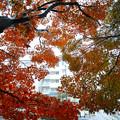 写真: 団地と紅葉(2)