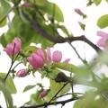 写真: 高嶺の花