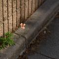 写真: 路傍の花
