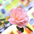 写真: 薔薇と自販機