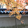 小石川後楽園05