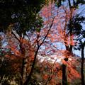 小石川後楽園37