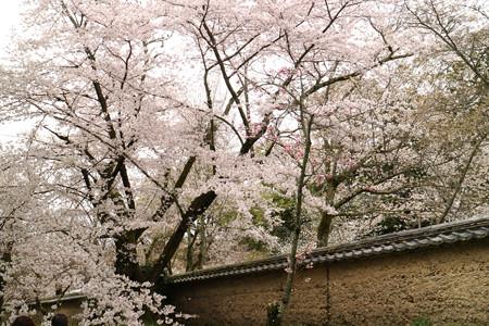 醍醐寺 (1)