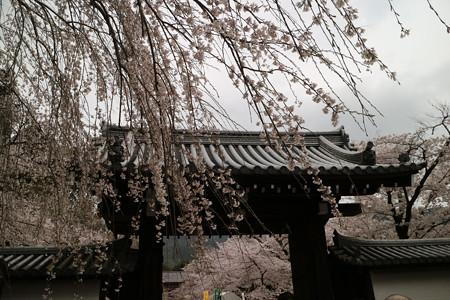 醍醐寺 (2)