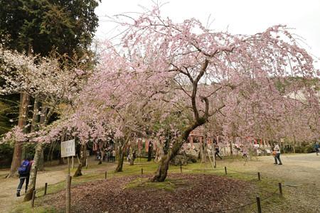醍醐寺 (12)