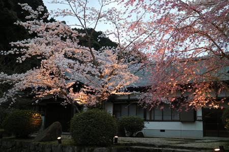 三井寺(園城寺) (3)