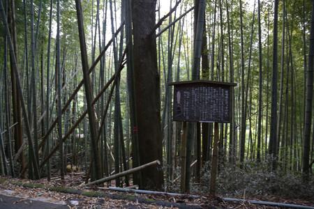 権現森と息継ぎの井戸