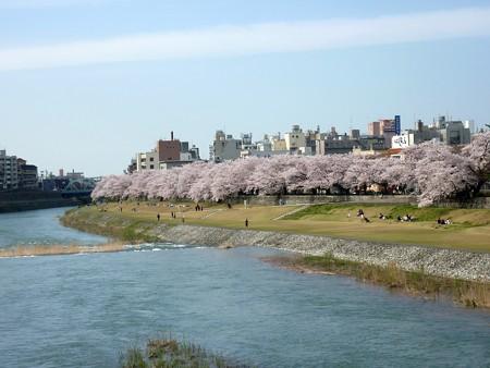 13、寺町〜犀川の桜